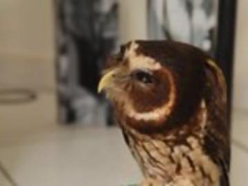 Cute Owl Gives Eskimo Kiss